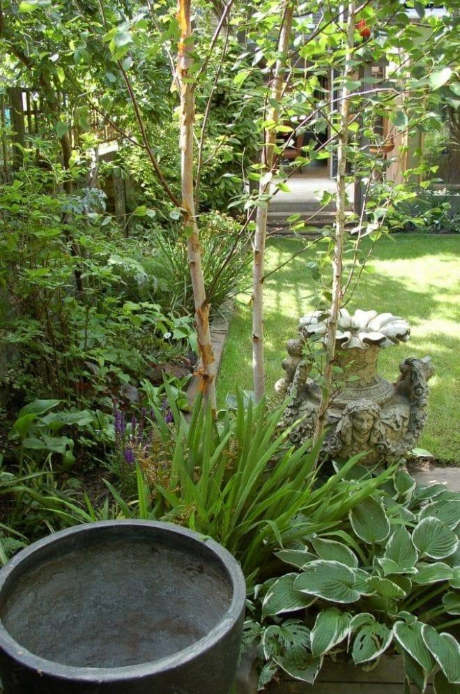 garden-of-rooms_pot-and-birch