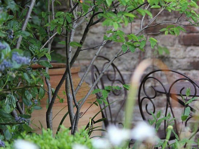 garden-maintenance-364