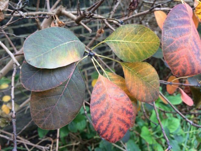 poplar-grove-2